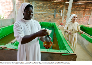 Algae growing Nuns help war struck Africa