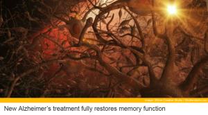 Alzheimer Breakthroughs in Mice